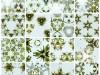 ranunculus-digital-collage-2014